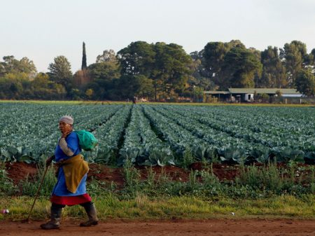 Parlamento sul-africano aprova redistribuição da terra usurpada