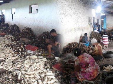 87 pessoas são resgatadas de trabalho escravo em Alagoas, sendo 13 menores