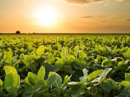 A soja pode acabar com a economia gaúcha (e com muito mais)