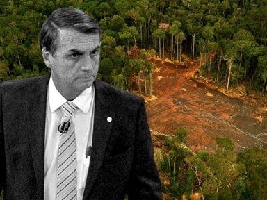 Bolsonaro grava vídeo em apoio a ladrões de madeira na Amazônia