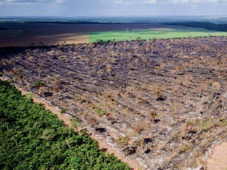 Cortes no Ibama agravarão desmatamento na Amazônia