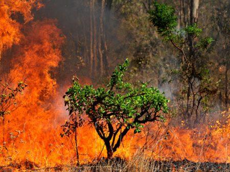 Aprodab: política ambiental do governo é retrocesso e destruição