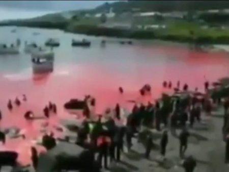 Bolsonaro mentiu: vídeo de caça das baleias não é na Noruega