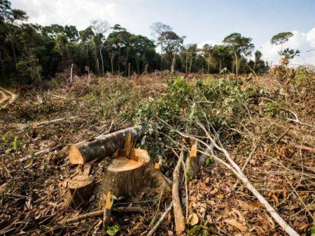 Desmatamento da Amazônia aumenta 278% em julho