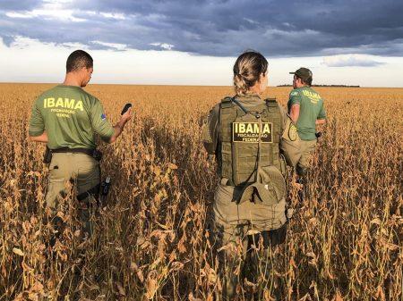 """Servidores do Ibama denunciam desmonte e """"colapso da gestão ambiental"""""""