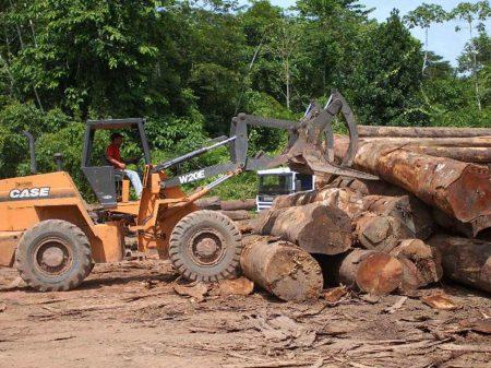 Desmatamento na Amazônia cresceu 25% só em julho, informa o Imazon