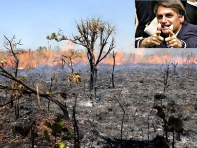Bolsonaro atiça destruição e culpa governadores e ONGs por queimadas