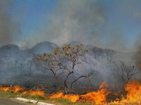 Retórica de Bolsonaro incentiva ação de milícias no desmatamento na Amazônia, diz entidade