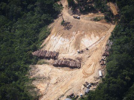 Com Bolsonaro, 7.854 km² da floresta amazônica foram destruídos