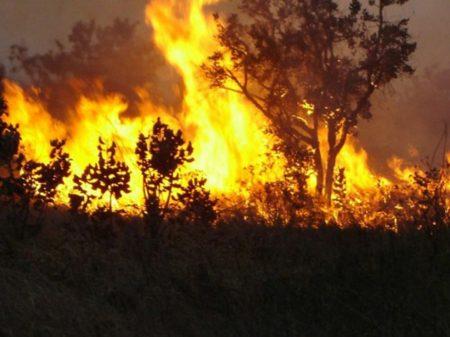 Cientistas rebatem Bolsonaro e mostram que queimadas na Amazônia foram recordes