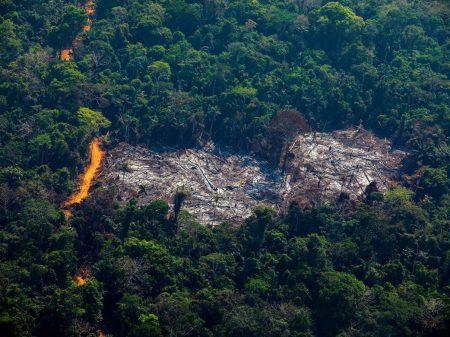 Governo é que estimula os crimes ambientais, não os pobres, rebatem cientistas