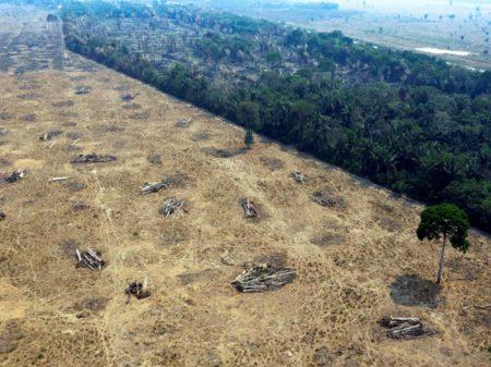 Desmatamento da Amazônia cresceu 183% em dezembro, aponta o Inpe