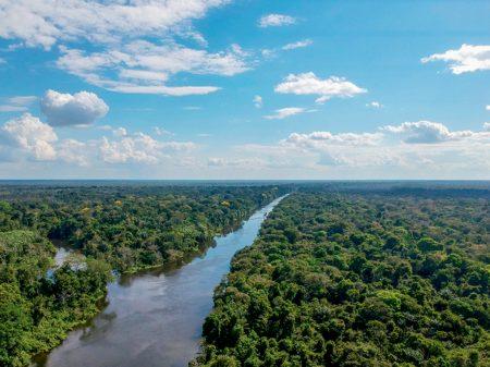 Grileiros na Amazônia vão ser beneficiados pela MP 910, alerta pesquisador