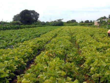 MP permite que bancos tomem terras do produtor