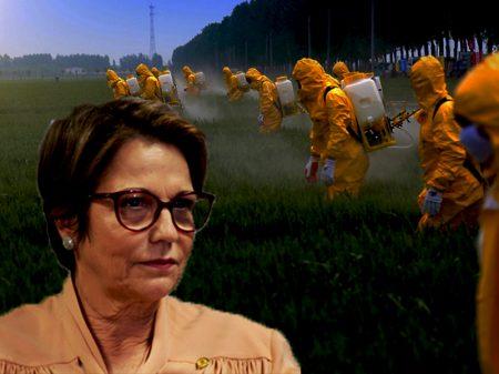 """AGRO É TUDO: """"Musa"""" determina aprovação automática de agrotóxicos"""
