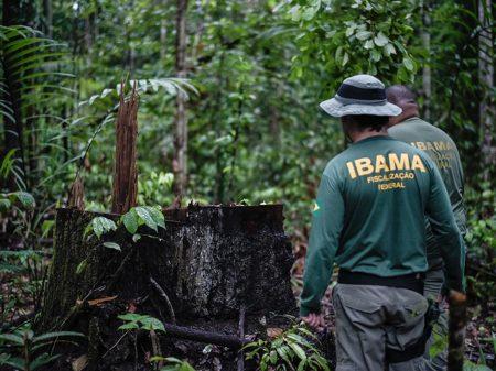 Servidores denunciam crimes do governo contra o Ibama e o meio ambiente