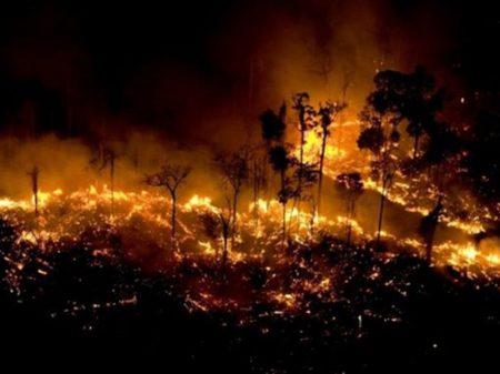 Ex-ministros cobram medidas contra desmatamento