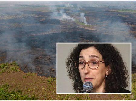Tentam esconder, mas dado do desmatamento 'não sairá bonitinho e vai aparecer', diz Lubia