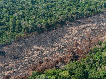 Desflorestamento da Amazônia cresceu 33% entre agosto/2019 e julho/2020