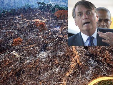 """""""Tolerância zero"""" de Bolsonaro não é com o desmatamento. É com a fiscalização"""