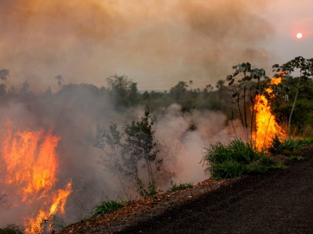 Inércia do governo faz Senado criar comissão para acompanhar queimadas no Pantanal