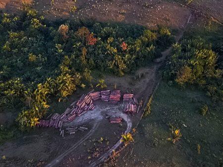 Entidades denunciam que o governo mantém retidos R$ 2,9 bi do Fundo Amazônia