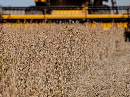 Governo libera importação de soja e milho