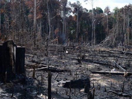 Desmatamento dispara na  Amazônia, mas o governo quer é eliminar as ONGs