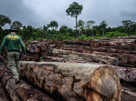 Desmatamento da Amazônia é o maior já registrado em 12 anos, aponta o Inpe